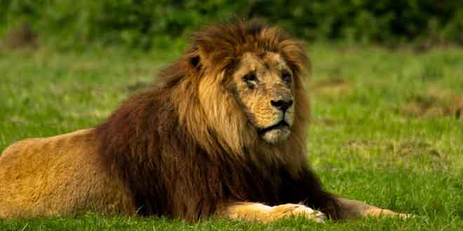 leon-salva-niña-en-etiopia