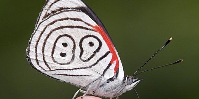 mariposa 89