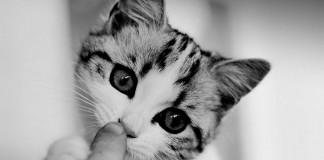 El ronroneo de los gatos alivia el estrés