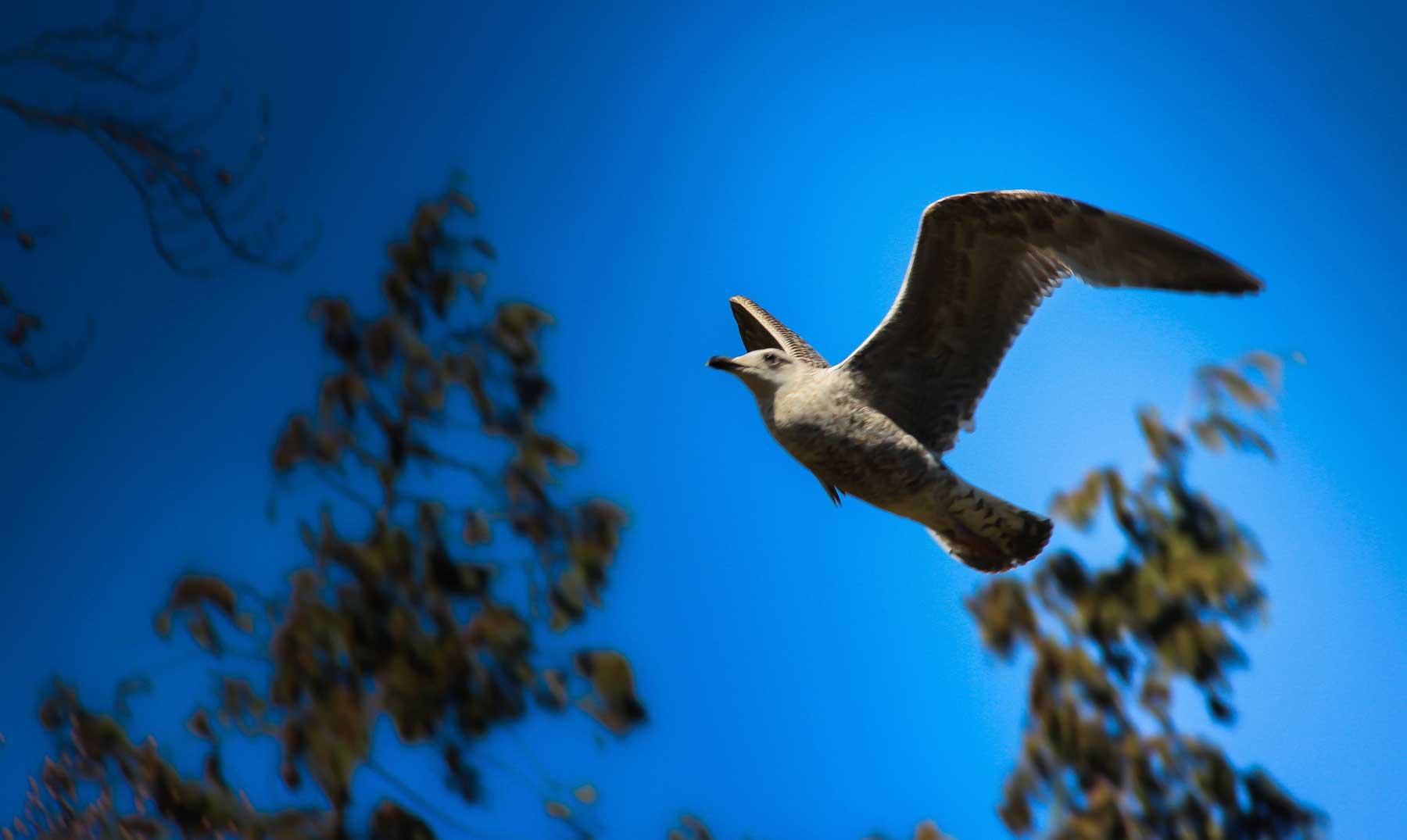 ¿Cómo se orientan las aves en sus vuelos?
