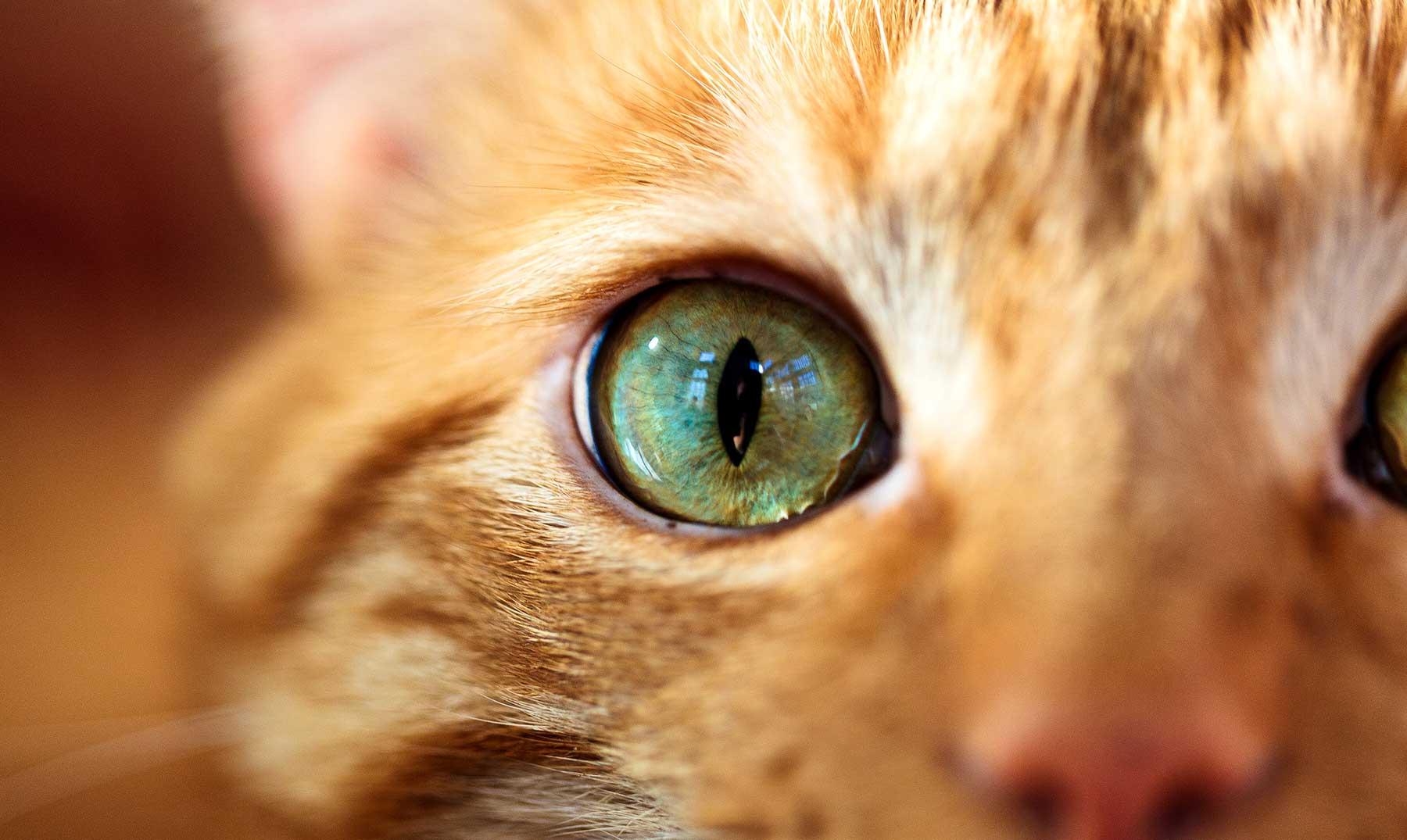 ¿Cómo ven los gatos el mundo?