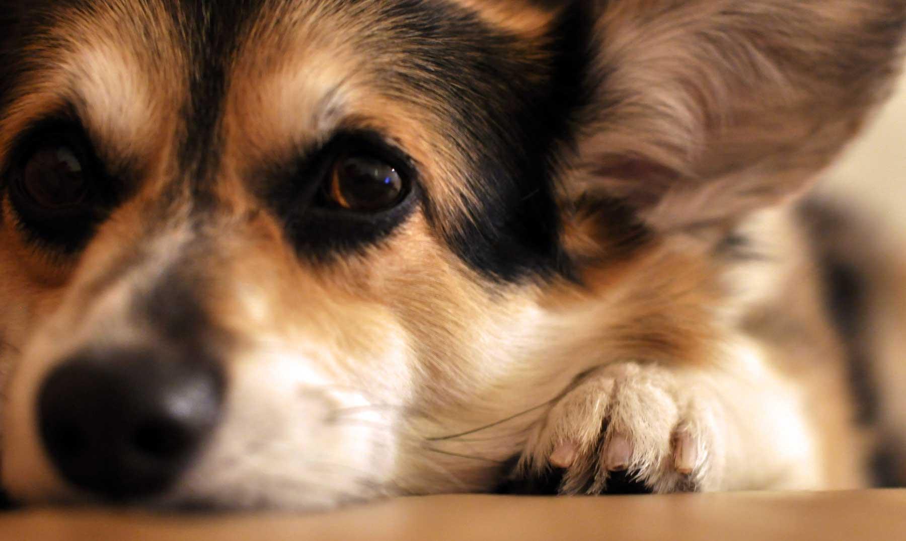 ¿Sabes que tu perro nota cuando estás triste