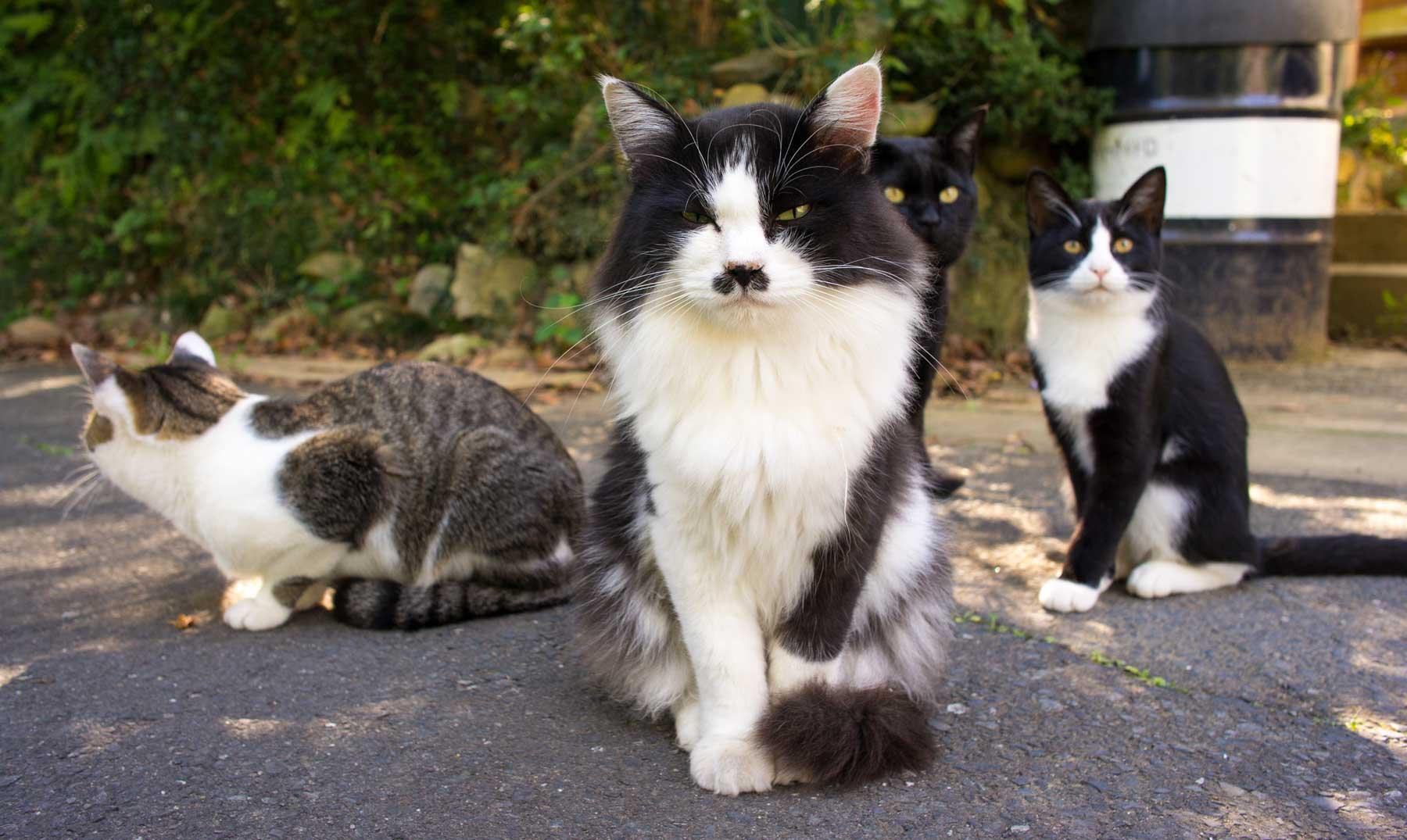 Tashirojima, la isla de los gatos de Japón