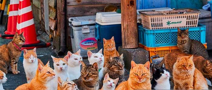 aoshima la isla de los gatos