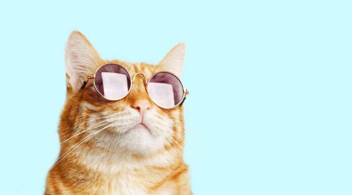 como es la vision de los gatos