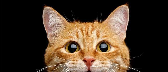 como ven los gatos de noche