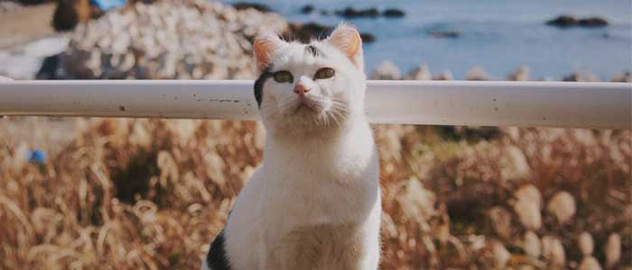 isla de los gatos japon
