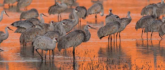 migracion en aves