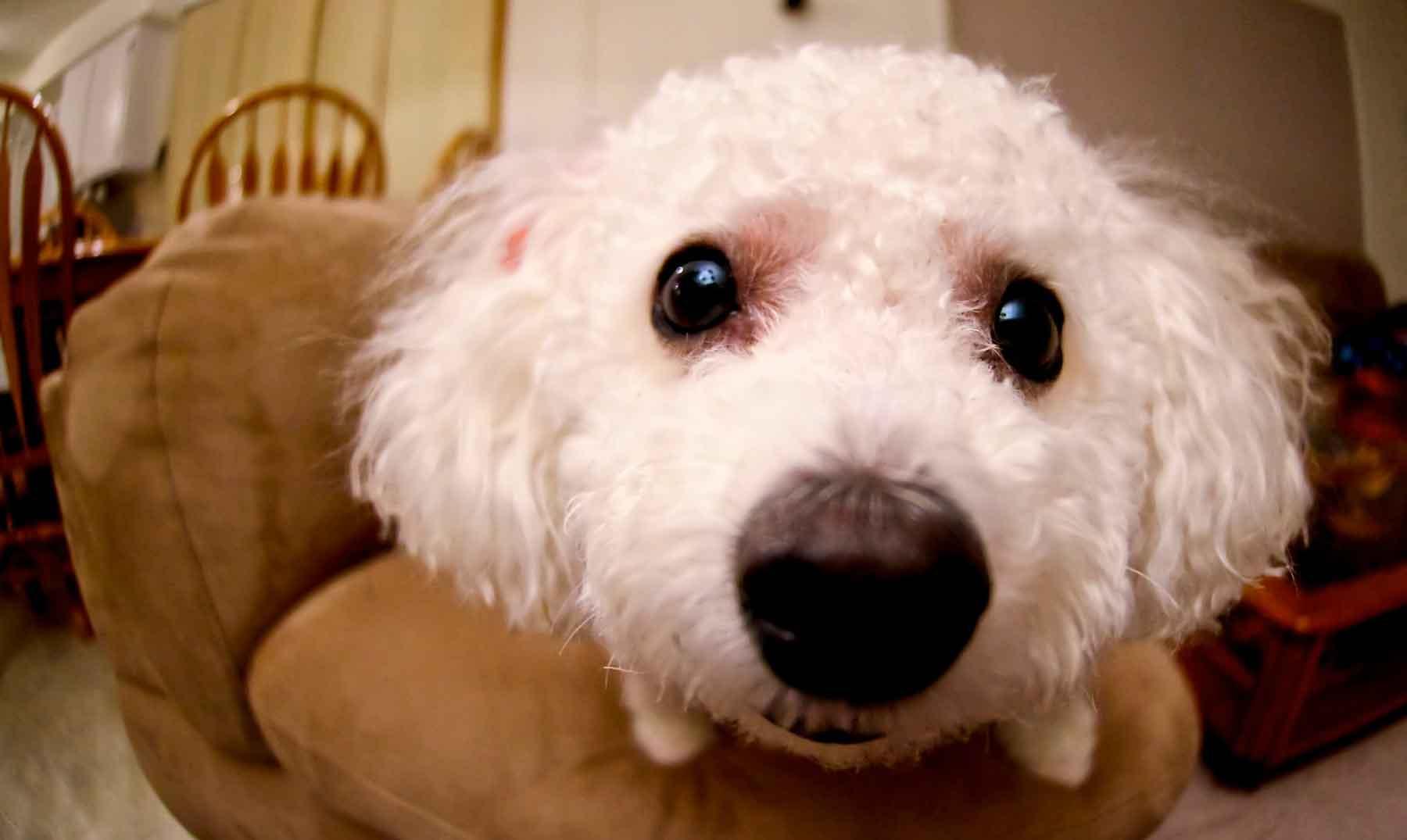 ¿Es verdad que los perros pueden oler enfermedades?