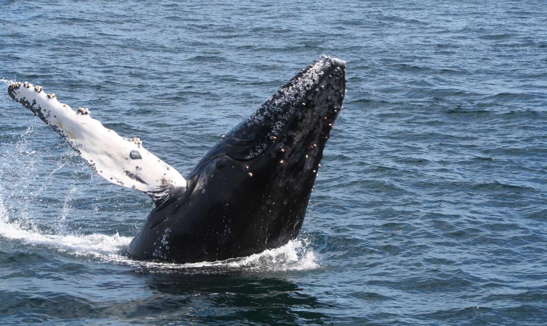 La ballena más triste del mundo