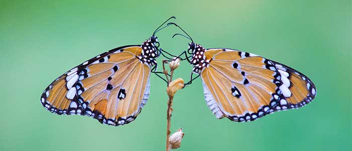 que es el efecto mariposa