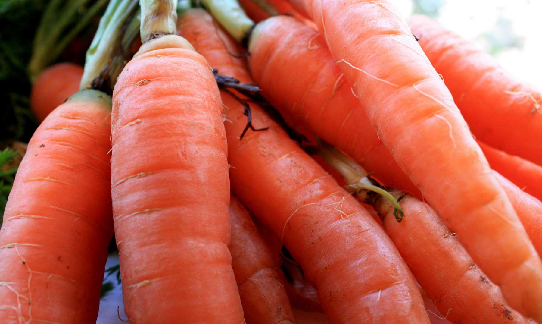 Los holandeses y su gran invento: las zanahorias naranja