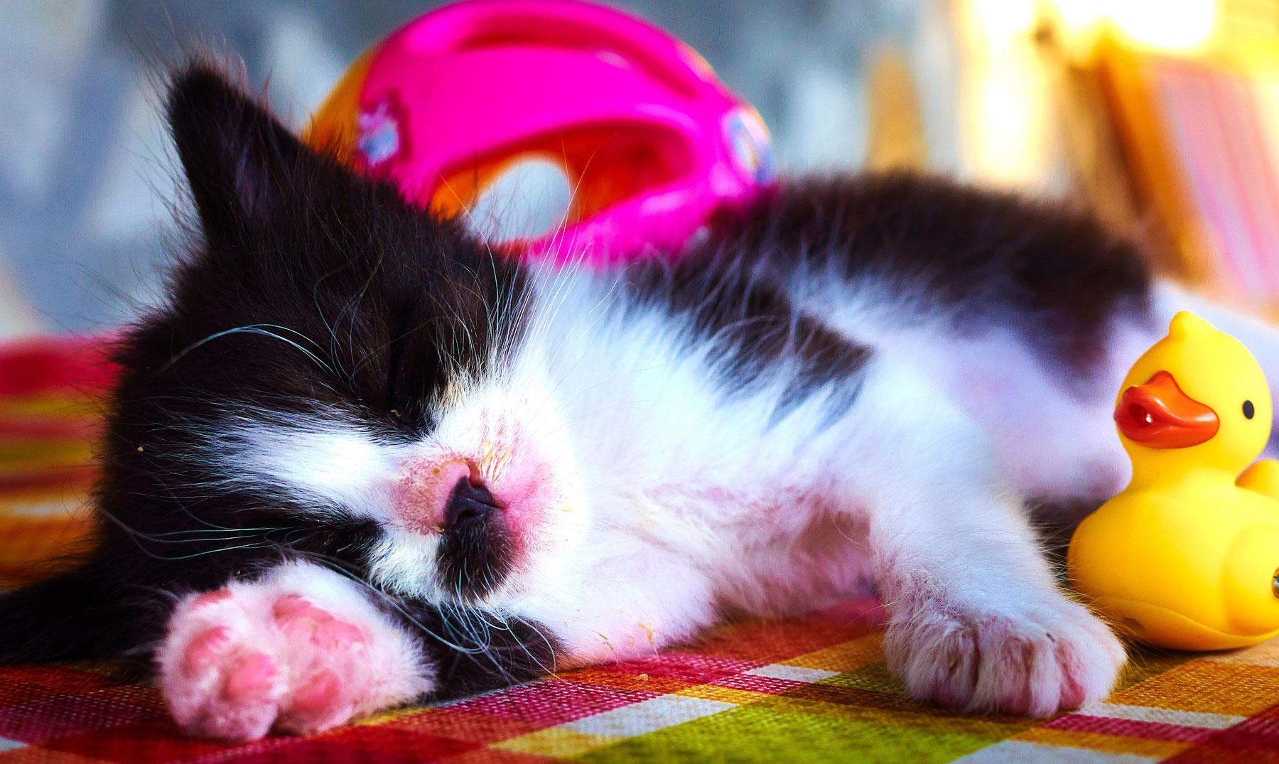 Alimentos que nos ayudan a conciliar el sueño