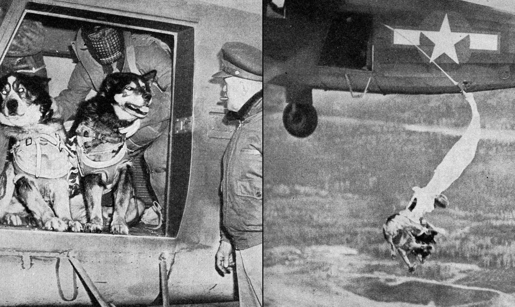 Los perros paracaidistas del desembarco de Normandía