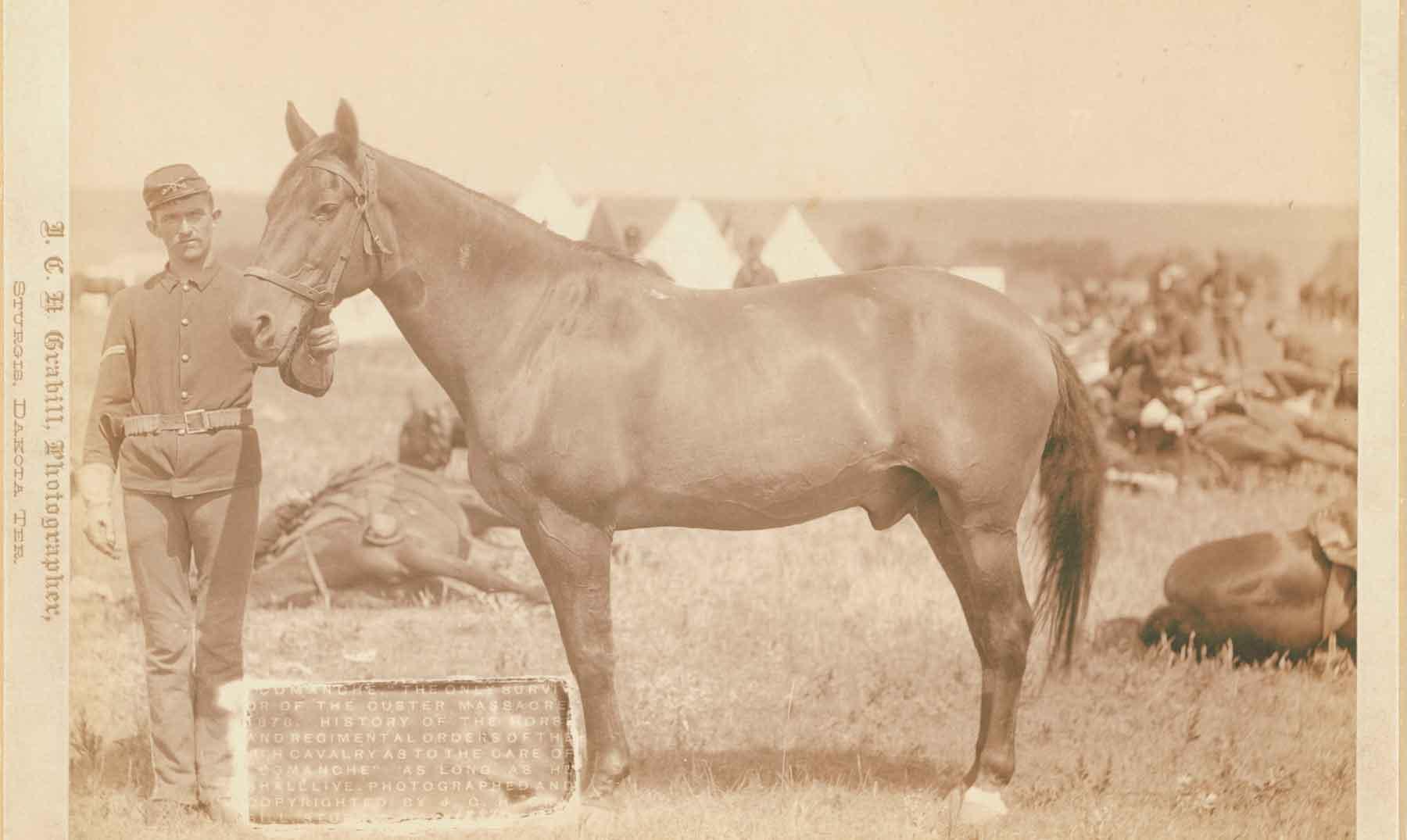 Comanche, el valiente caballo condecorado