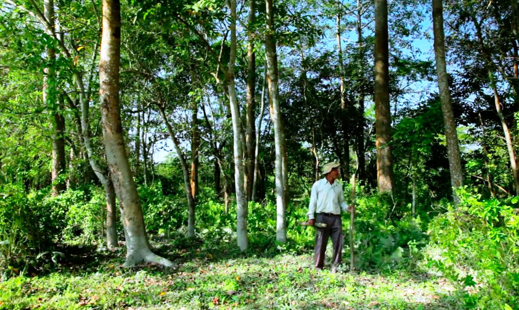 El bosque plantado por un joven