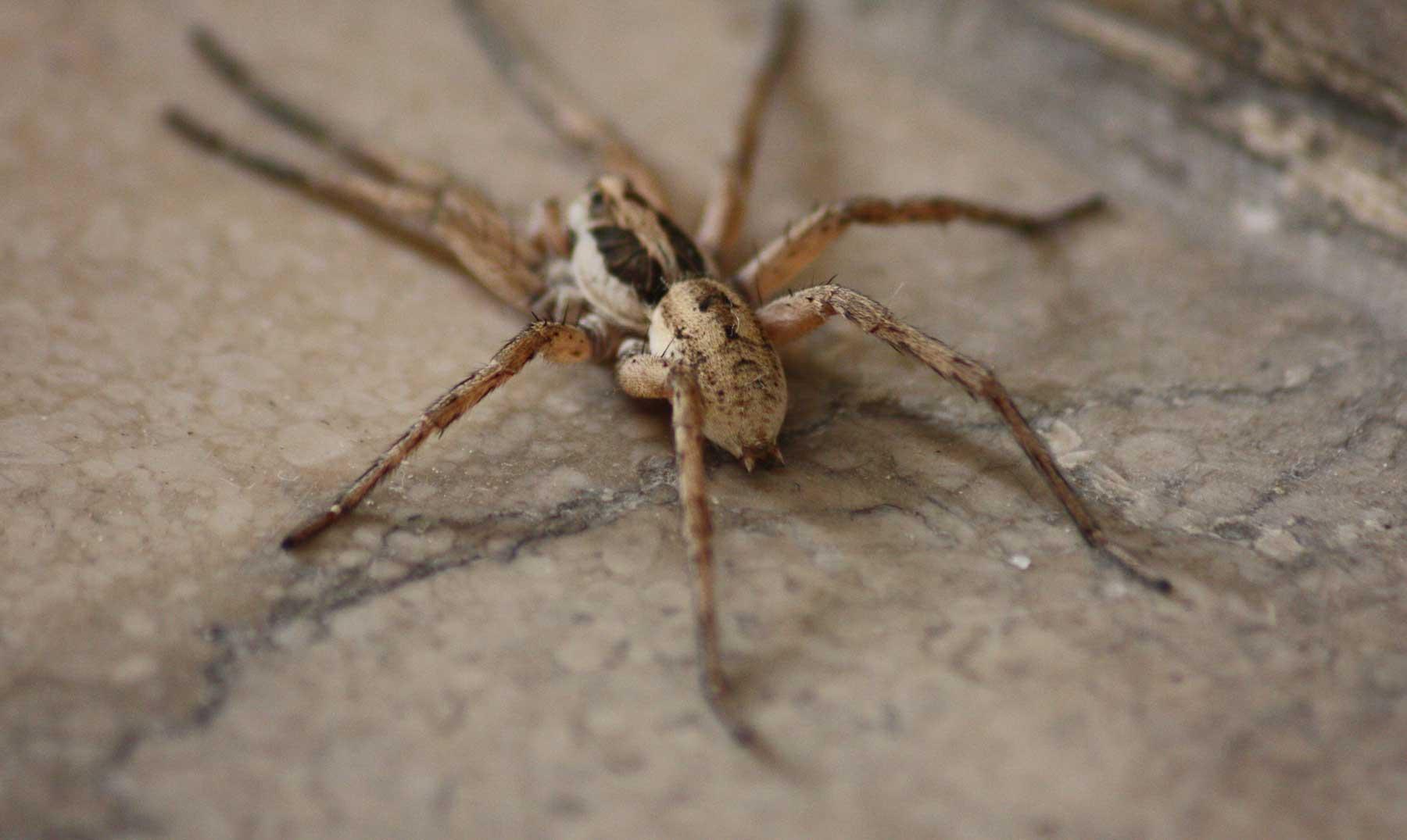 ¡A cubierto! Lluvia de arañas