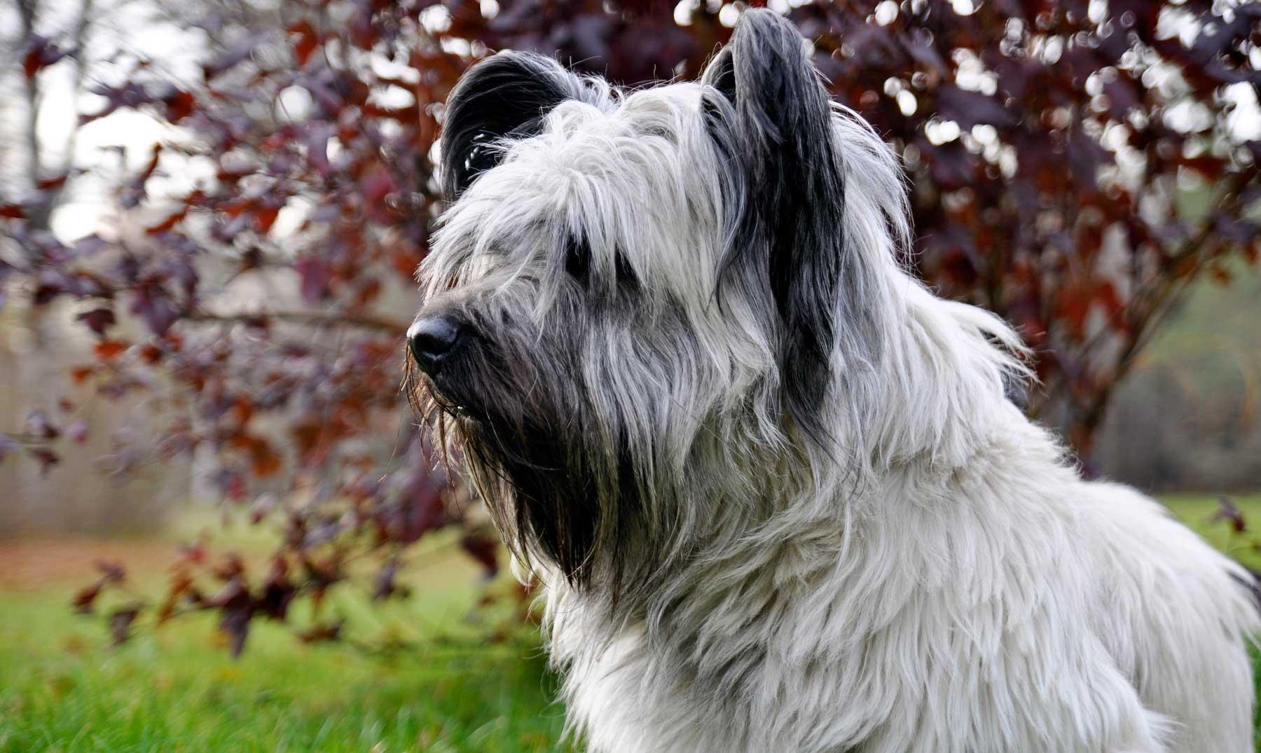 La triste historia del perro que esperó eternamente a su amo