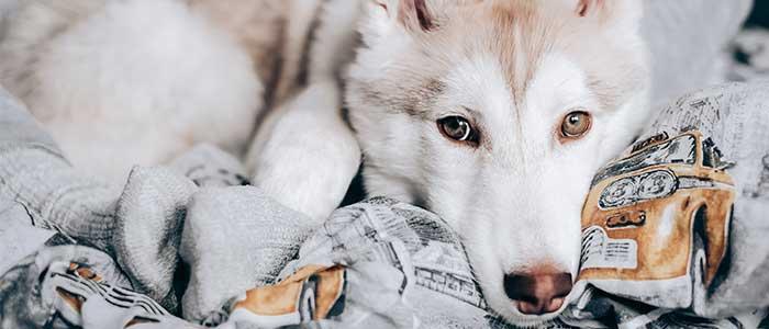 problemas de los perros