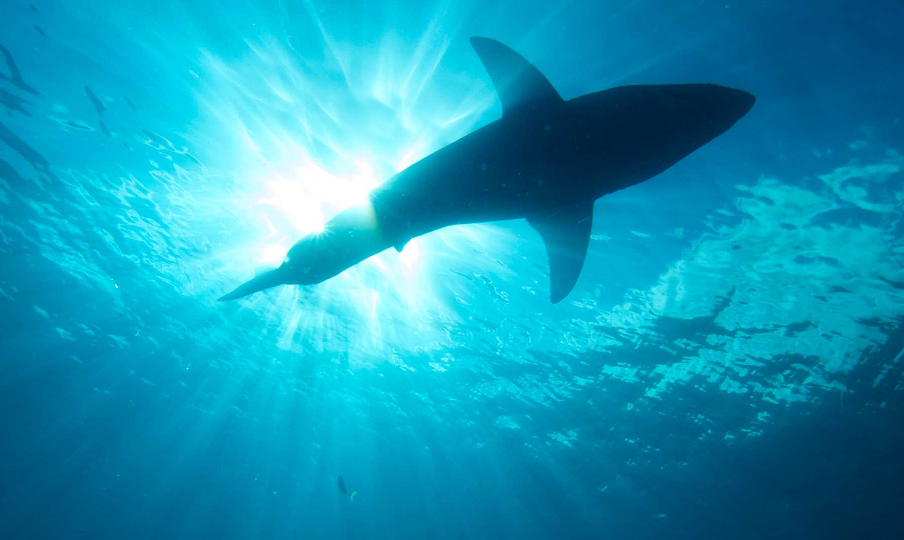 Jacques Cousteau: la bestia marina que pudo haber ocultado