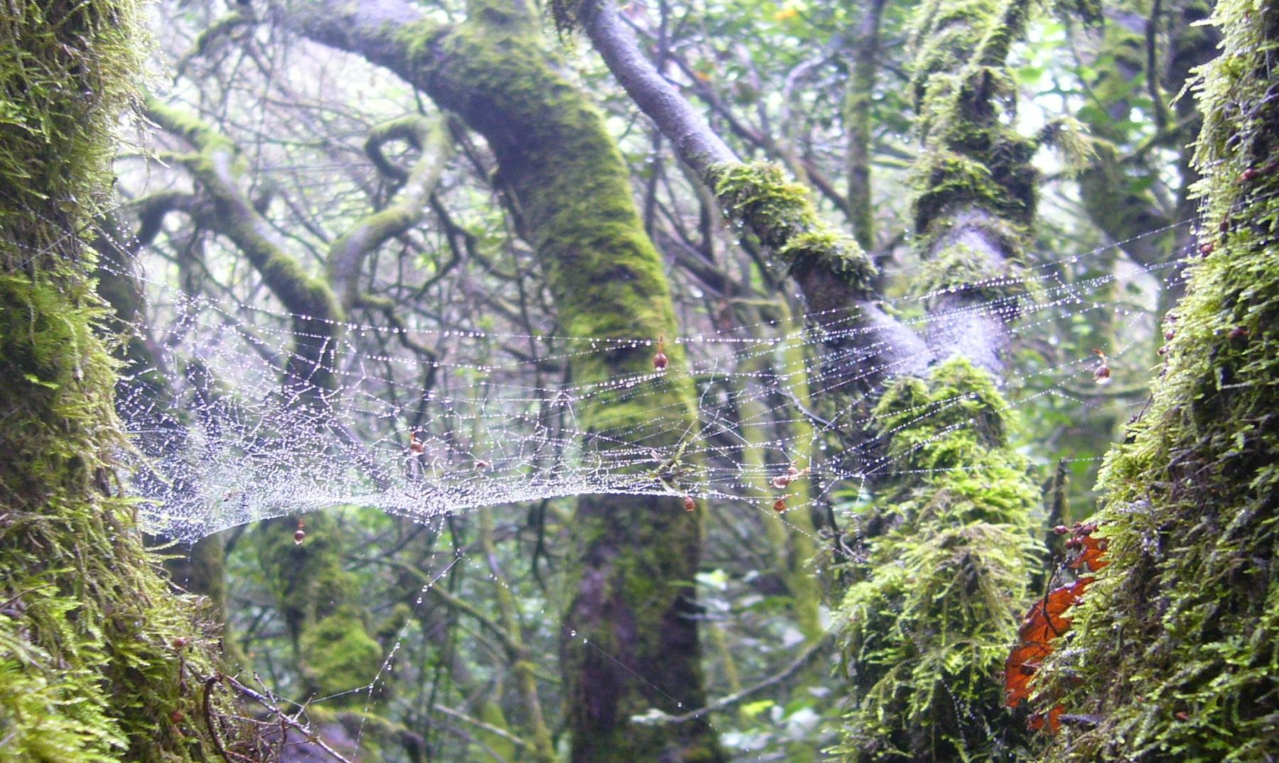 arboles telas de araña