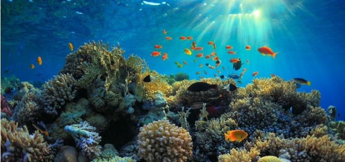 datos curiosos del océano
