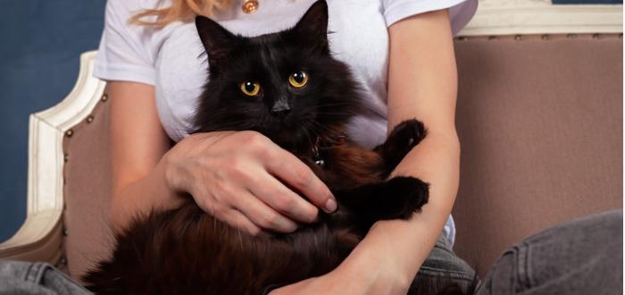datos curiosos de los felinos