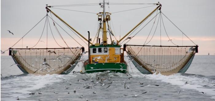 datos curiosos del mar