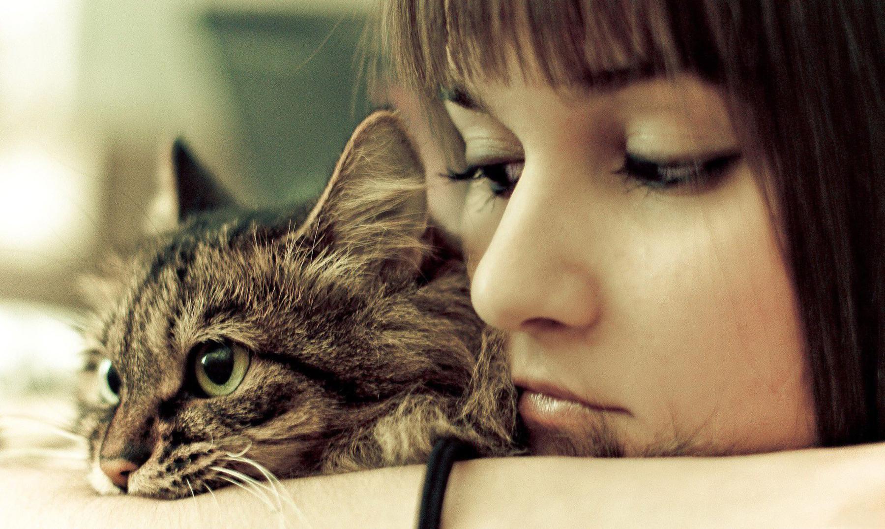 Tucker, la extraña gata que encontró un final feliz