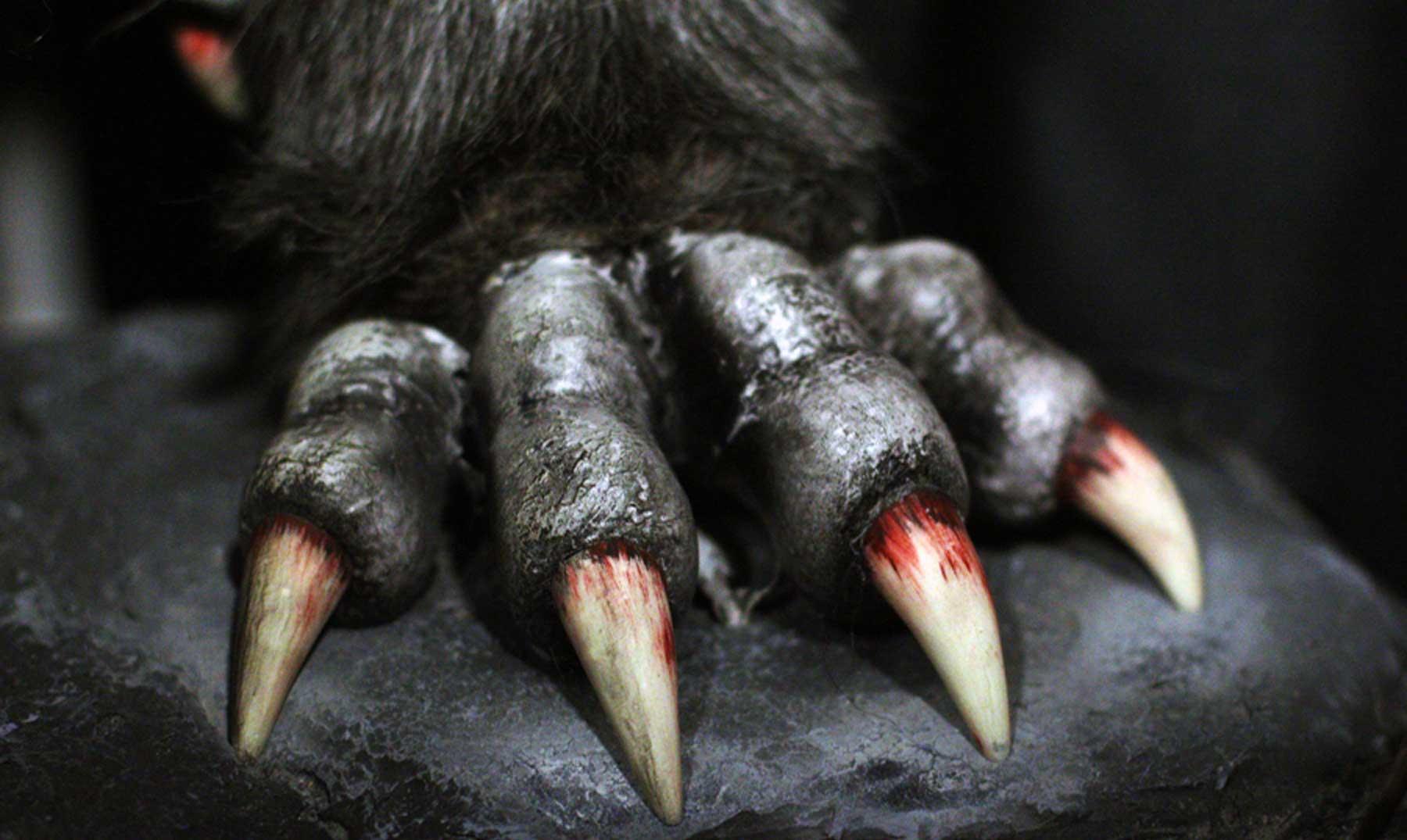 ¿Cuándo y dónde surge la leyenda del Hombre Lobo?