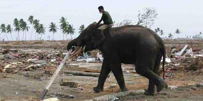 Elefante en Aceh, Indonesia, tras el tsunami de 2004