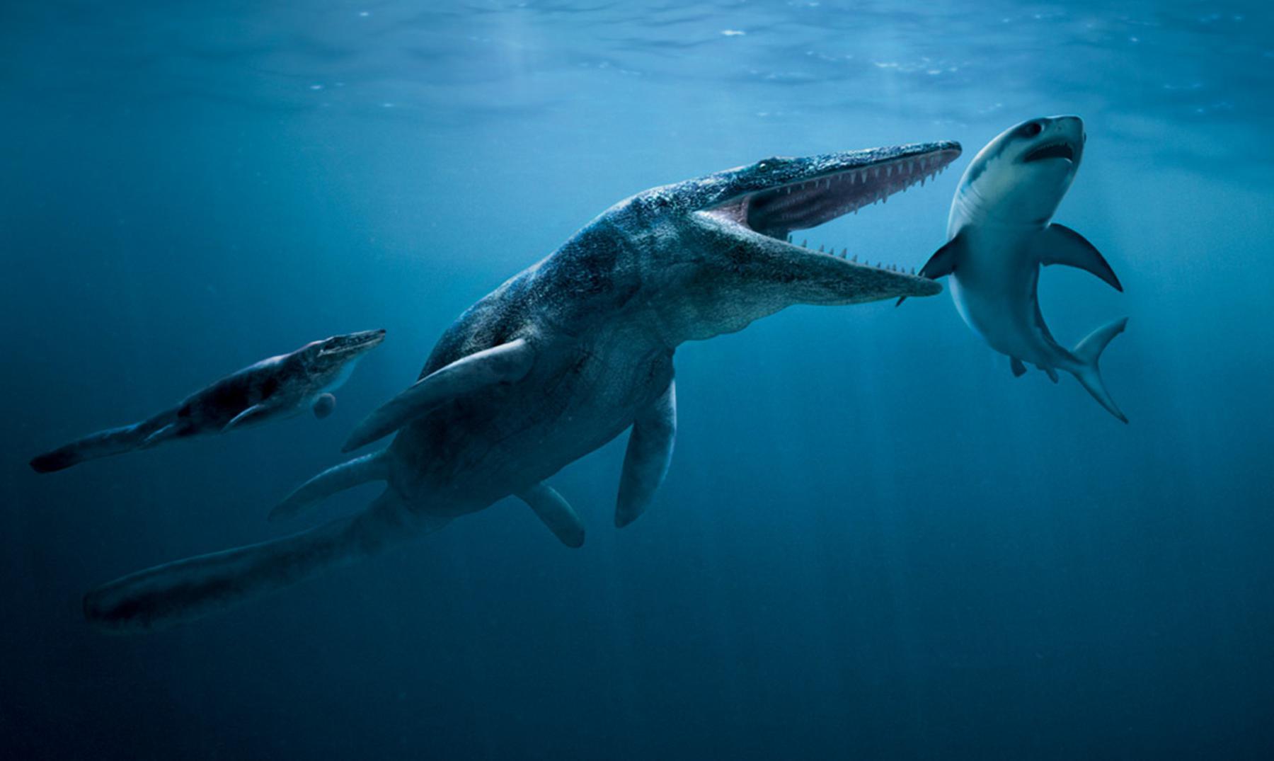 Las terroríficas profundidades del Océano en la Prehistoria, Megalodón