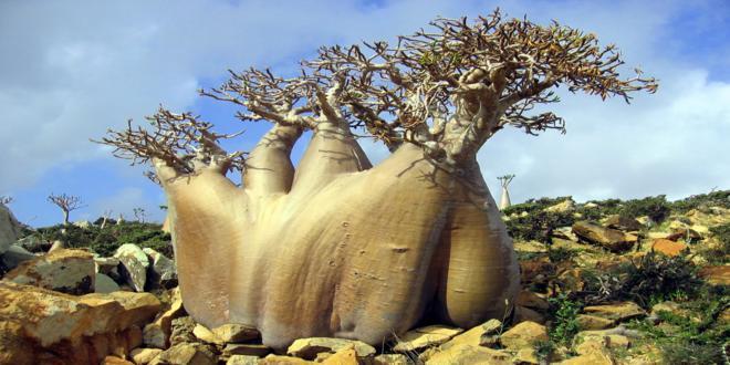 la isla encantada de yemen socotra_660x330
