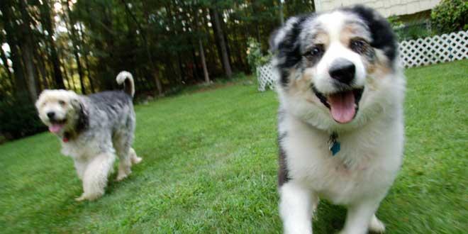 Perros persiguiéndote alegres