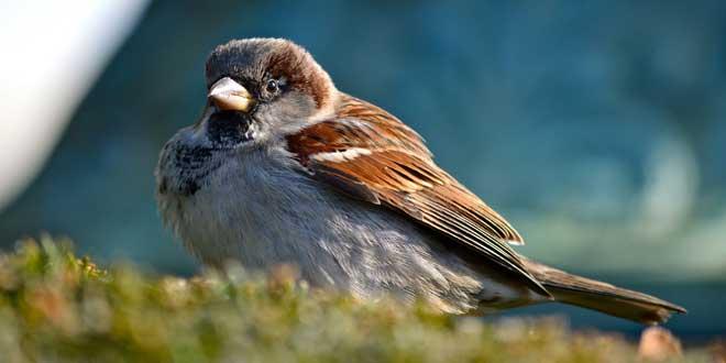 para qué sirven las plumas a las aves, pajarito