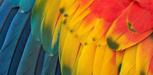 para que sirven las plumas de las aves