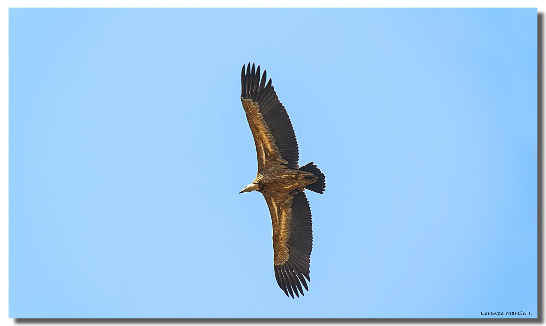 ¿Para qué les sirven las plumas a las aves?