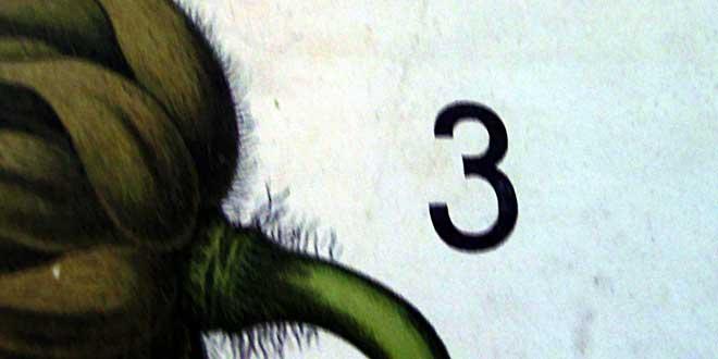 3 flor