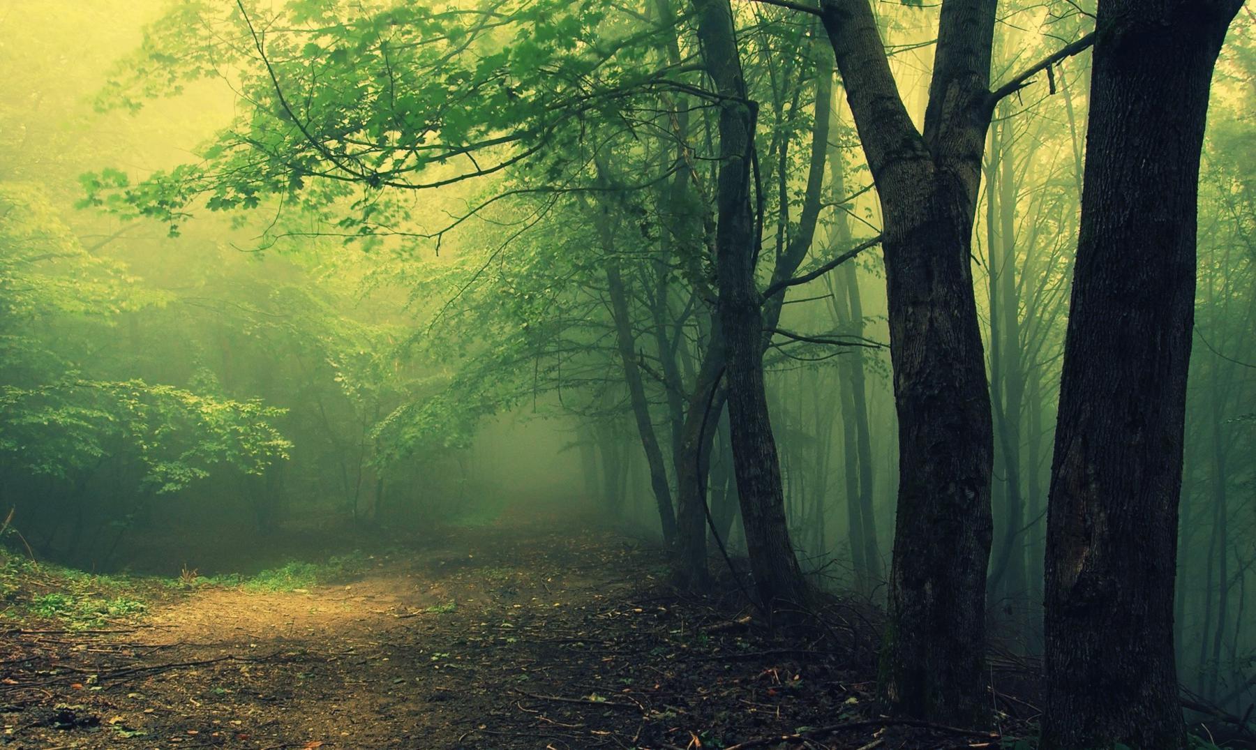 Hoia Baciu bosque encantado