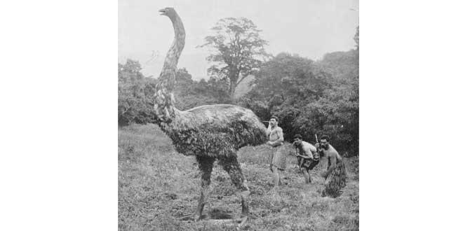 Recreación de un Moa a principios del siglo XX