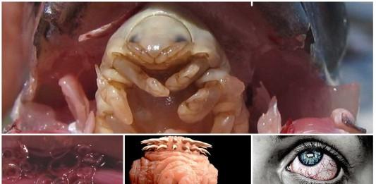Los 5 parásitos más desagradables de la naturaleza