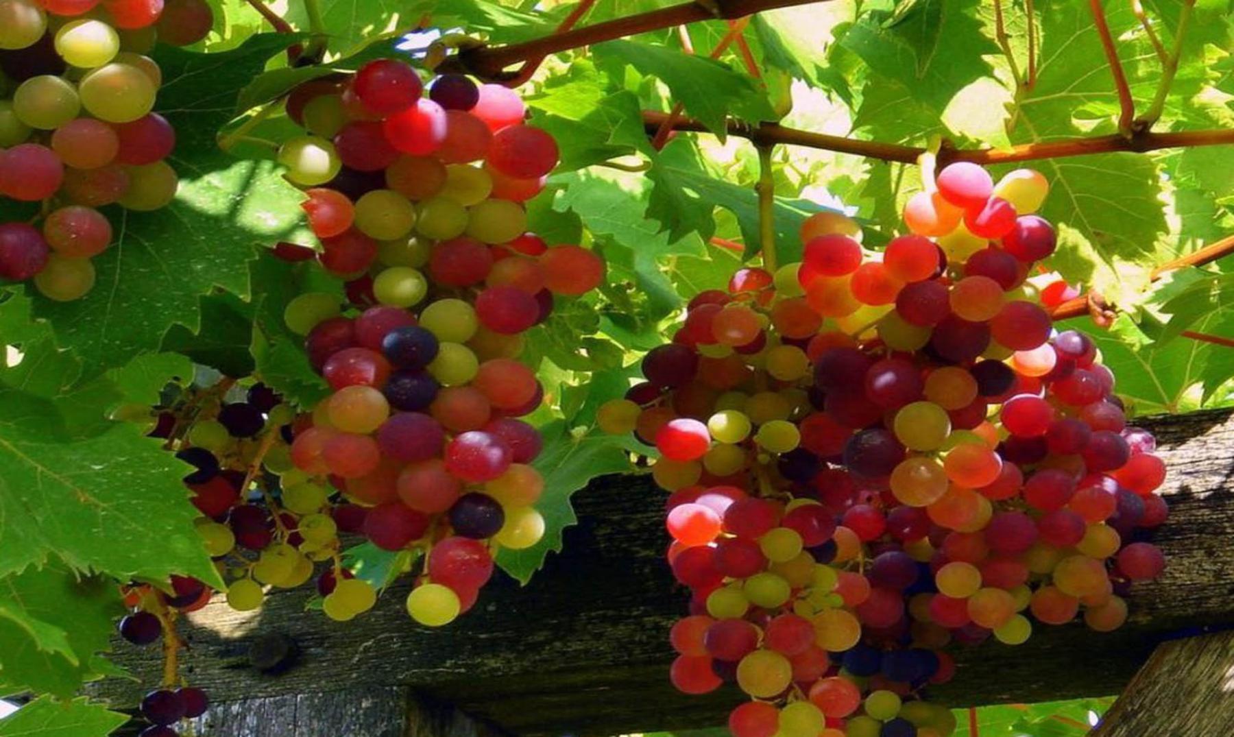 """¿Existen de verdad las """"uvas arcoíris""""?"""