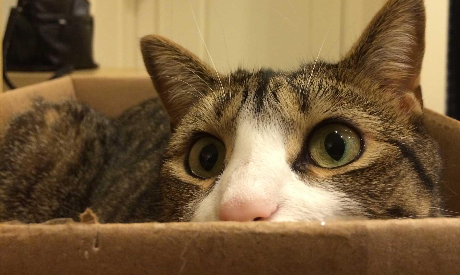 Resultado de imagen para imagenes gato encerrado