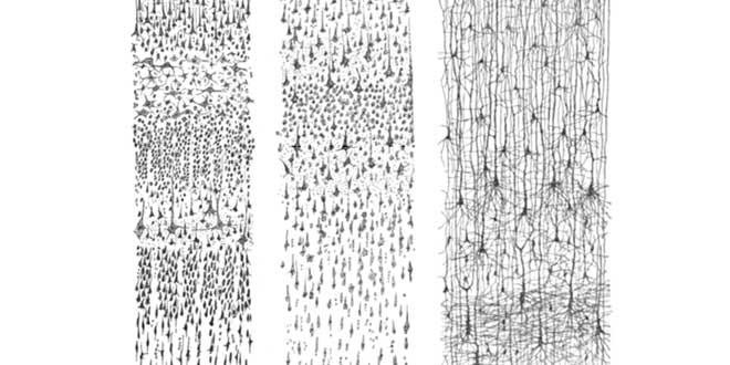 El artista de la neurona Ramn y Cajal