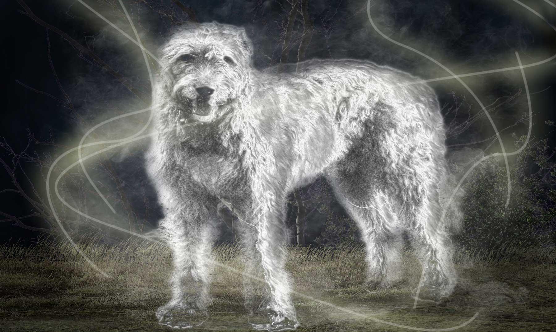 El Puente Overtoun y los suicidios caninos, ¿misterio resuelto?