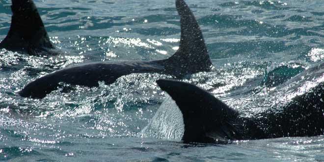 grupo de delfines