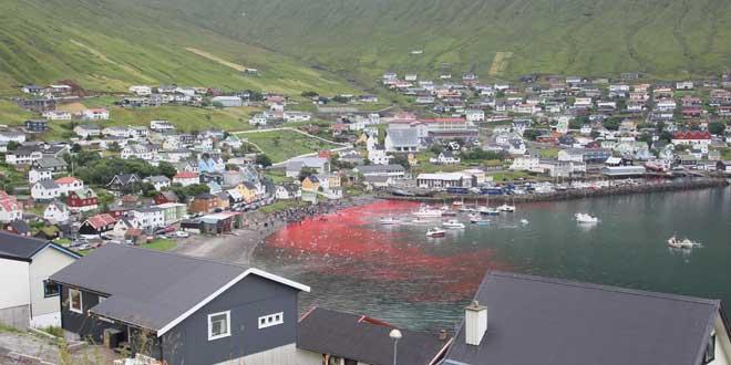 matanza ballenas islas faroe