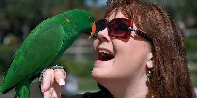 pájaro y humano