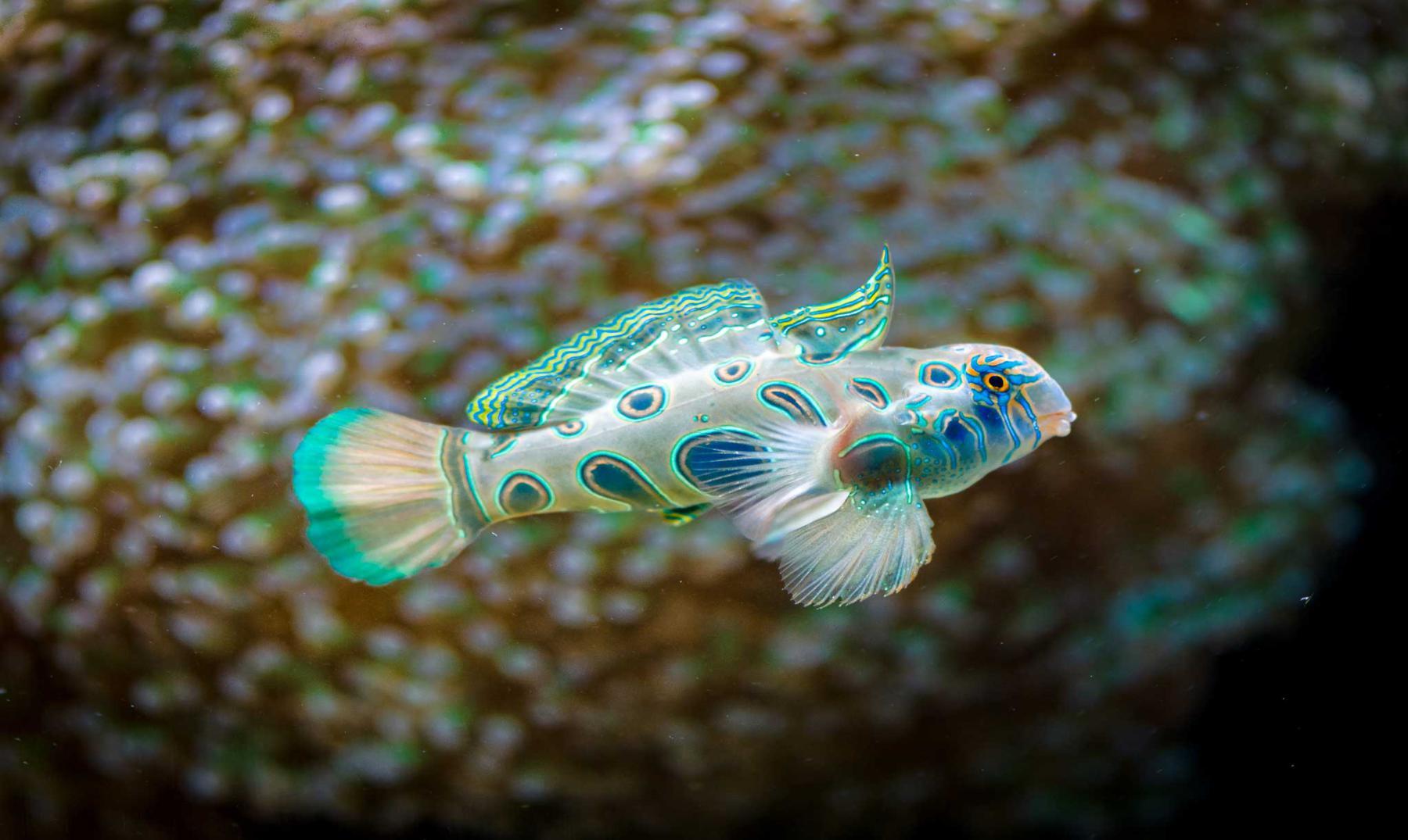 ¿Los peces beben agua?