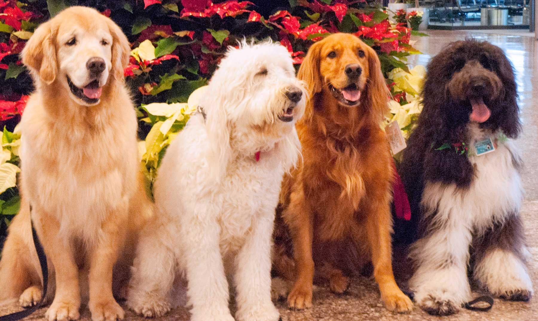 ¿Somos humanos gracias a los perros?